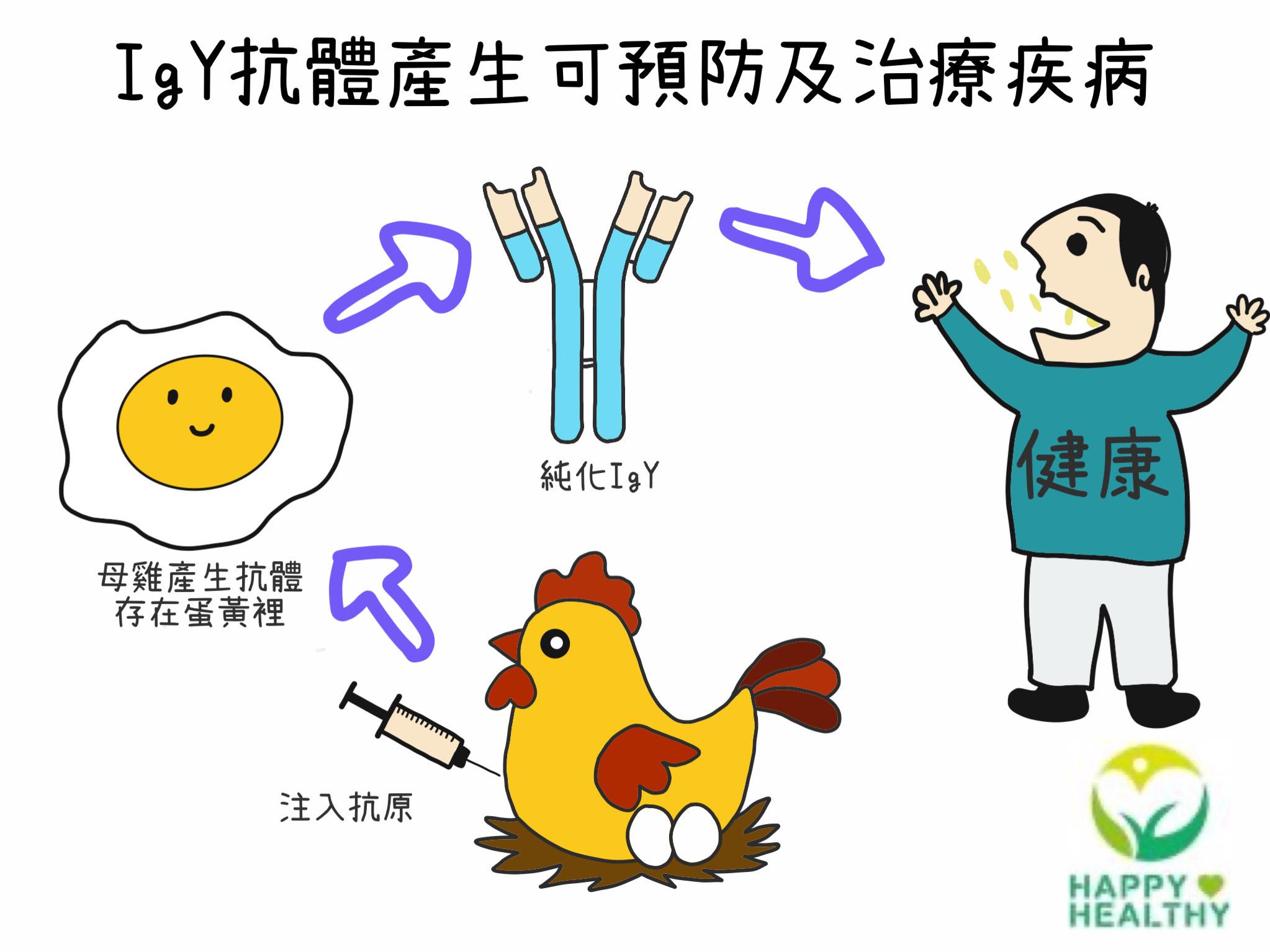 免疫球蛋黃體在預防及治療疾病的應用發展