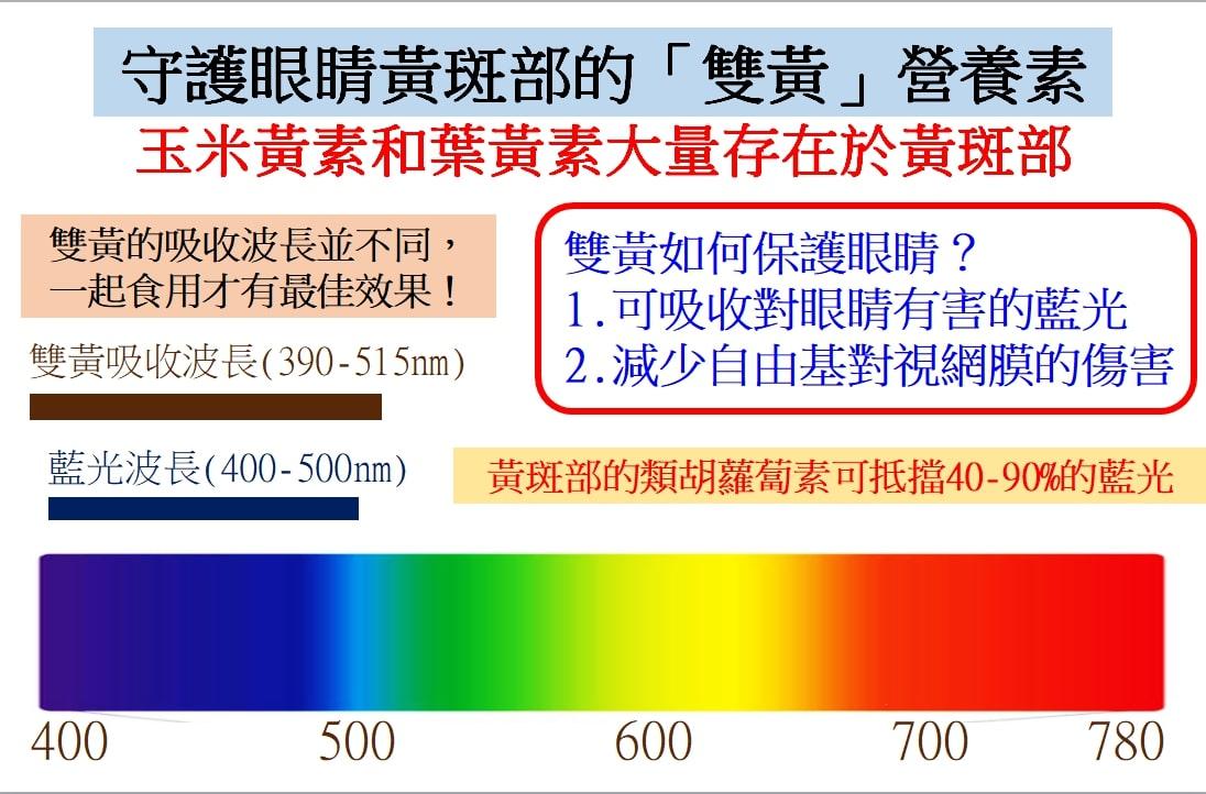 守護眼睛黃斑部的「雙黃」營養素