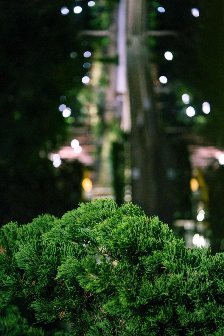 智利酒果守護夜間清晰